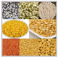 Pulses and Dals